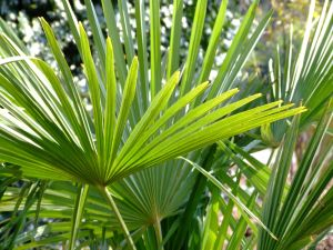 Some palms. Maybe these will be used for Palm Sunday?