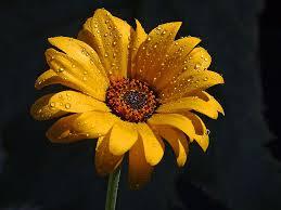 rainandflower