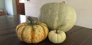 For Halloween, of course you need some Pumpkins as decorations.